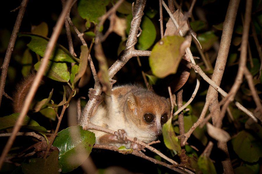 Madagascar 8 Ellen Page